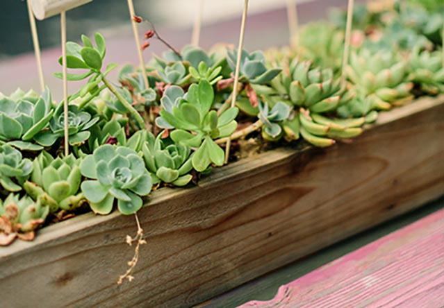 4 Perfect Ways To Use Succulents In Your Wedding