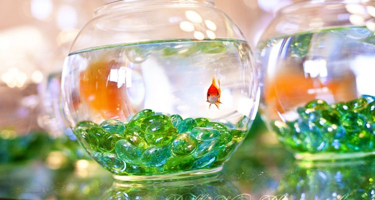 Creative Centerpieces One Fishbowl Six Different Uses Wedding
